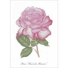 Série de 12 cartes postales «Fleurs»